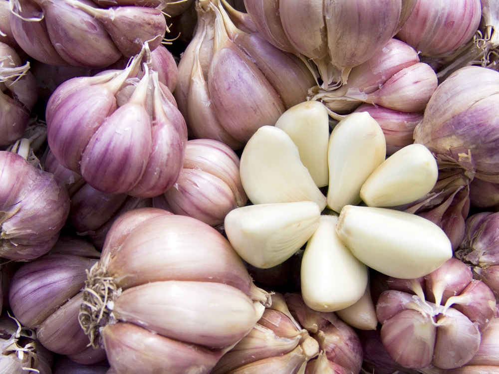 garlic secrets