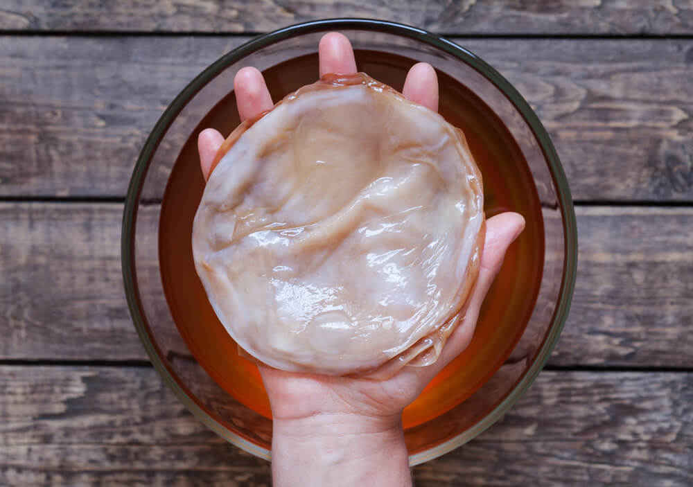 scoby for fermented kombucha tea
